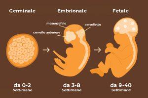 L'udito comincia a svilupparsi già nelle prime settimane di vita.