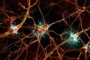 La percezione del feto nello sviluppo neurosensoriale.