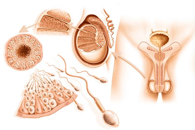 Anamnesi e alterazioni delle secrezioni ormonali